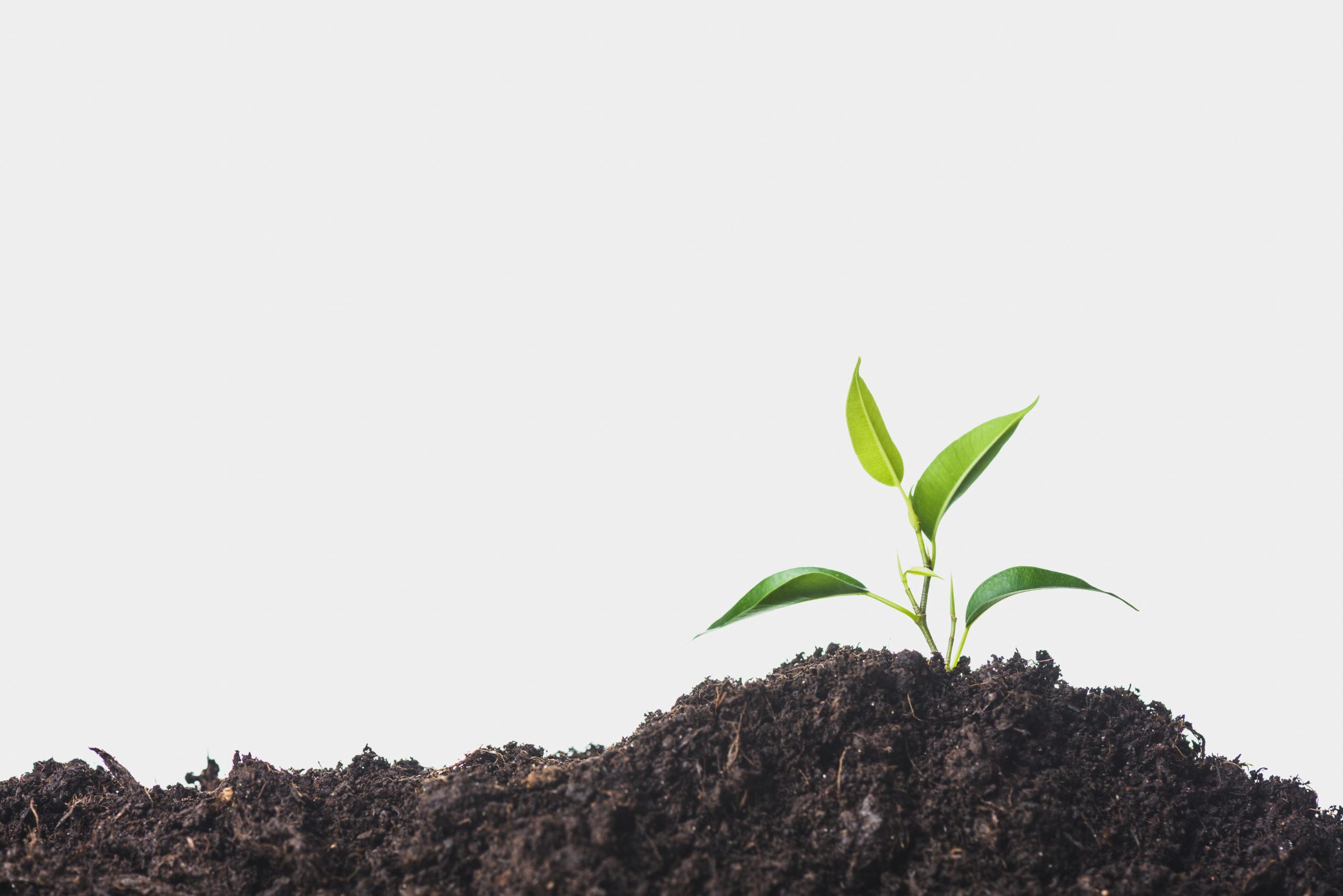 Movimento Slow Food e o prazer na alimentação