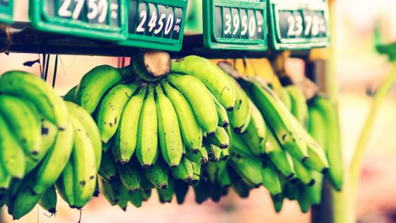 Biomassa de banana verde: benefícios e receita